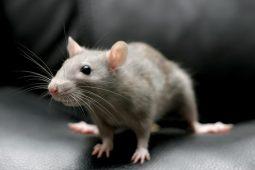 white-mouse-beautiful-picture-hd-desktop-wallpaper-1024x640